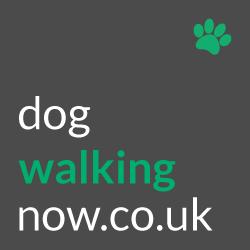 Dog Walking Jobs Dog Sitting And Daycare Jobs Uk